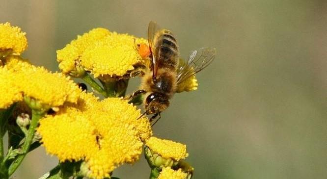 Nowe-barcie-dla-dzikich-pszczol